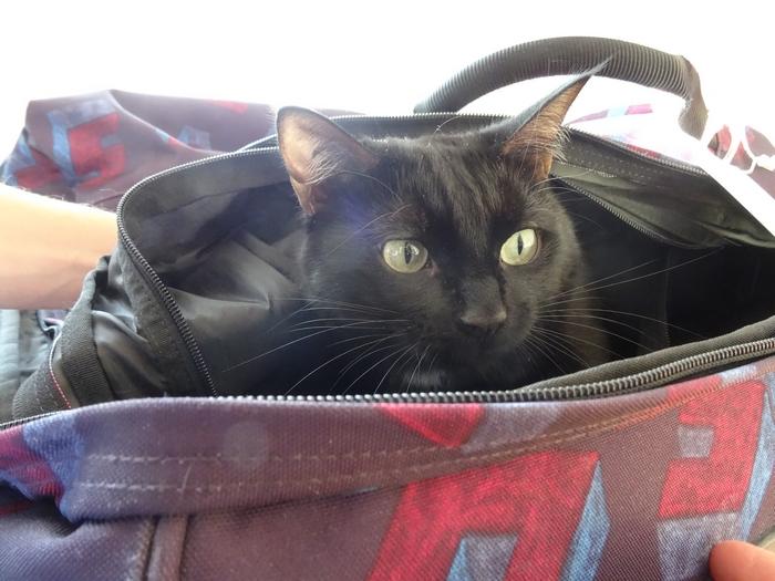 preuves que chat pense à vous pendant vacances