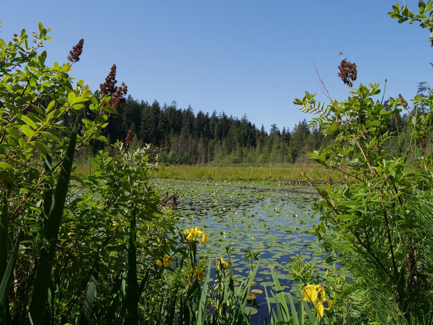 Stanley Park Beaver Lake Vancouver