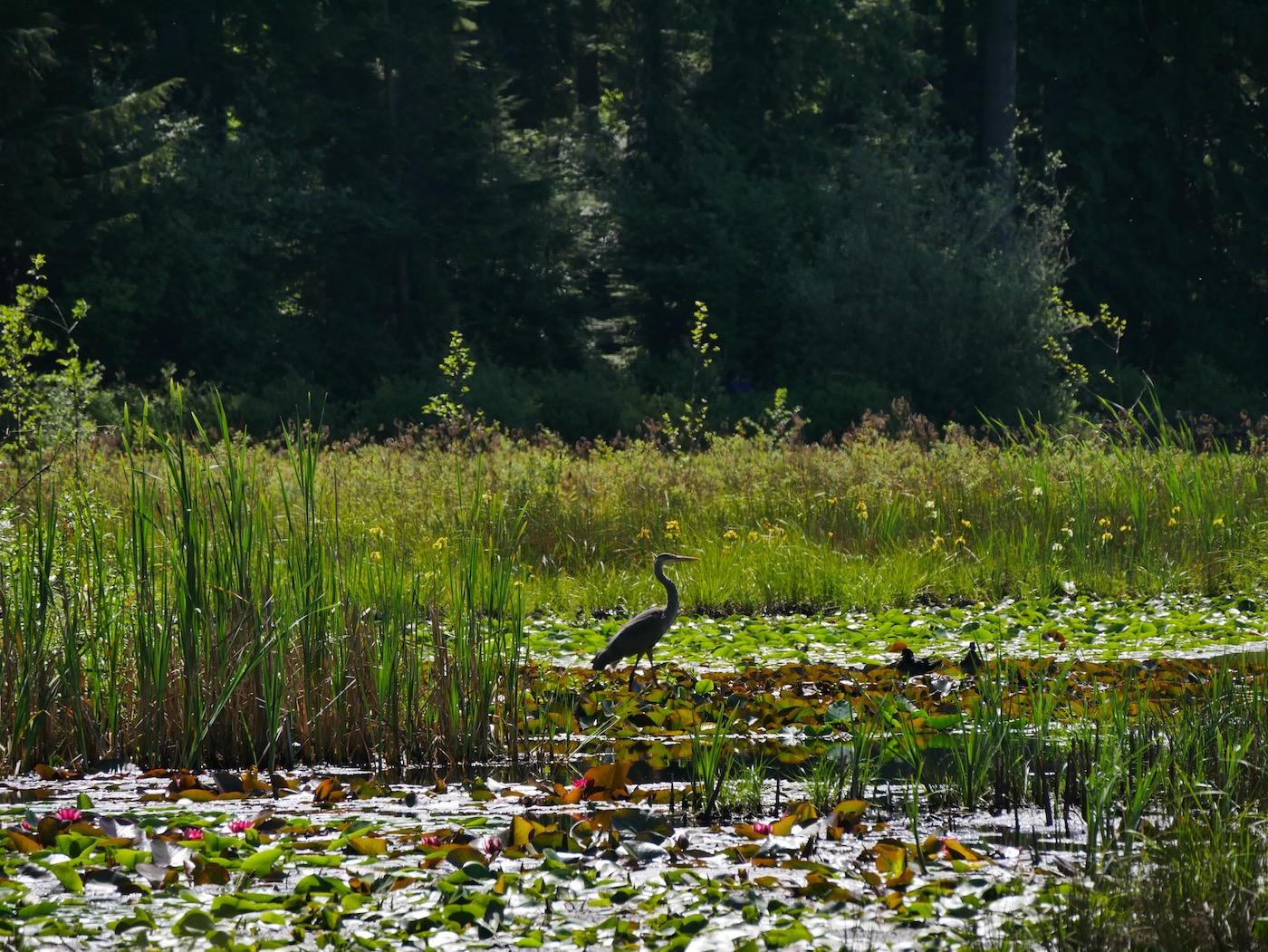 Beaver Lake Vancouver
