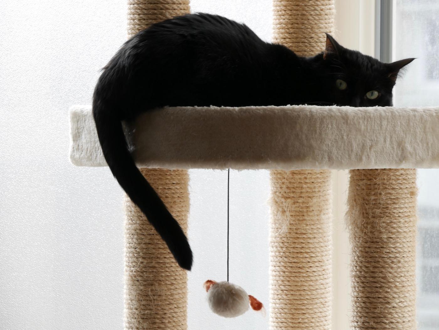 faire garder son chat pendant les vacances partons en voyage. Black Bedroom Furniture Sets. Home Design Ideas