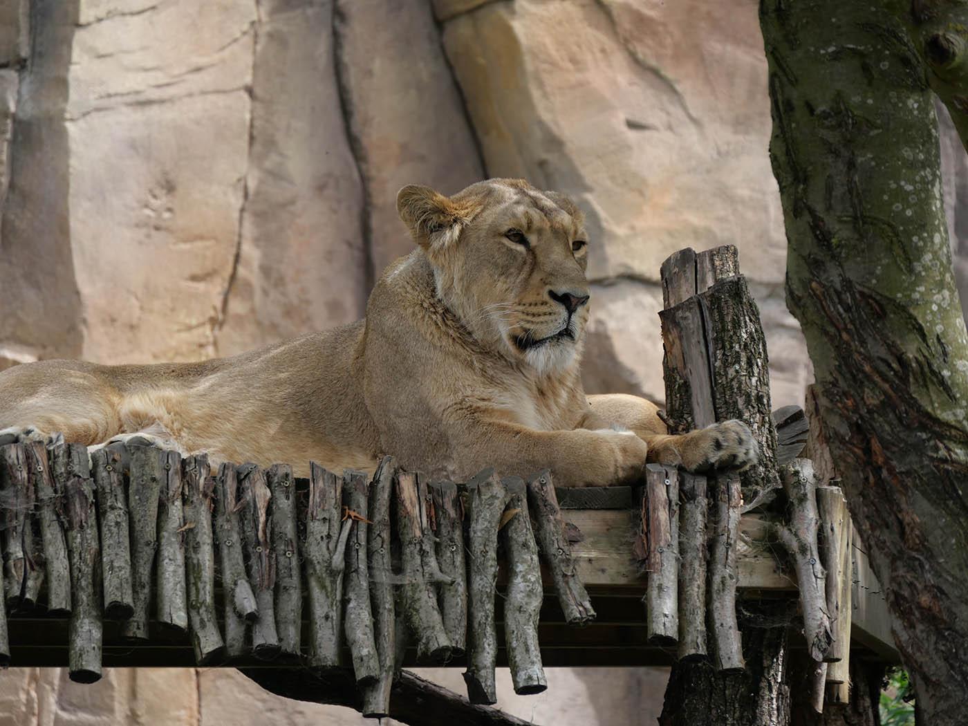 animaux du Zoo de Londres