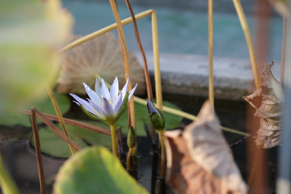 photo fleur gros plan avec Fujifilm XF 50